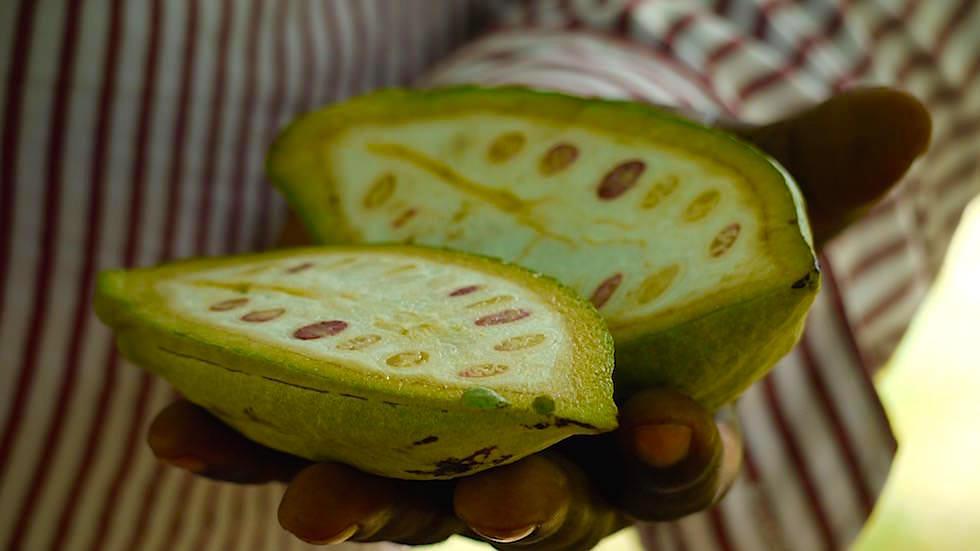 Kakao - Zanzibar - Gewürz Tour