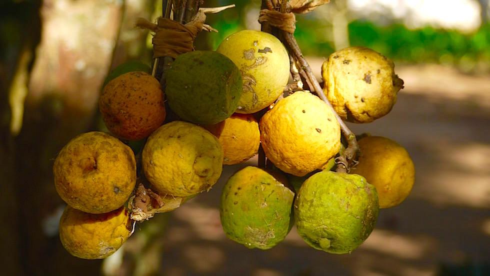Die leckersten Früchte überhaupt - Spice Tour - ein Highlight auf Sansibar - Tansania