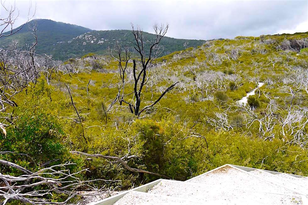 Blick in die Berge - Wilsons Promontory - Victoria