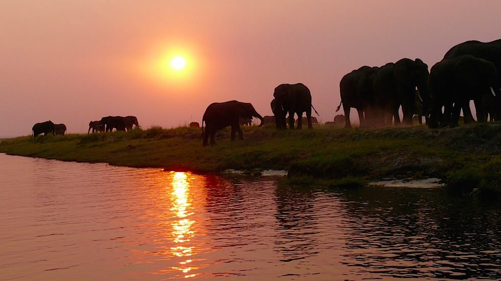 Elefanten in der Abendsonne - Chobe River Cruise - Chobe National Park in Botswana