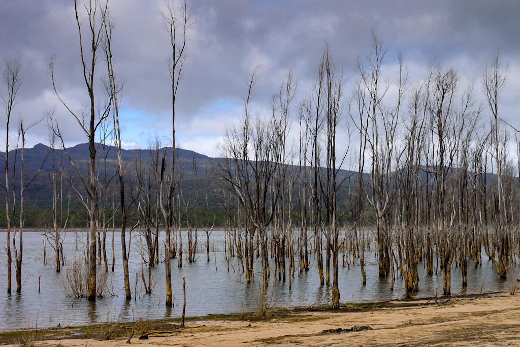 Lake Bellfield: mystischer See bei Halls Gap - Grampians Nationalpark - Victoria