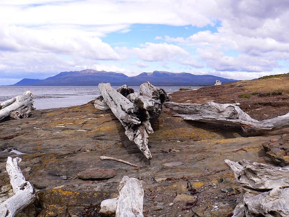 Holzstämme an der Küste Fort Bulnes - Chile Patagonien