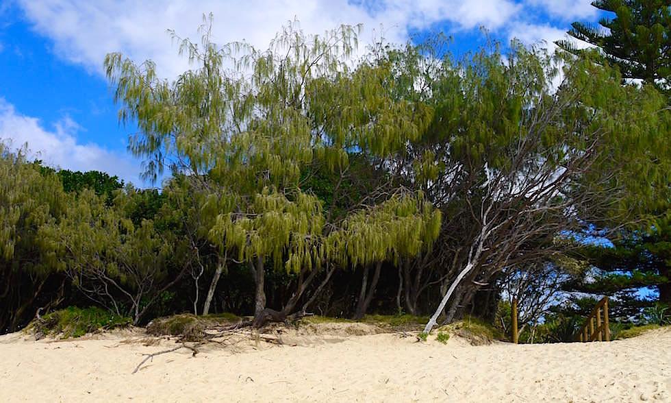 Strandzugang Moffat Beach Queensland Australien