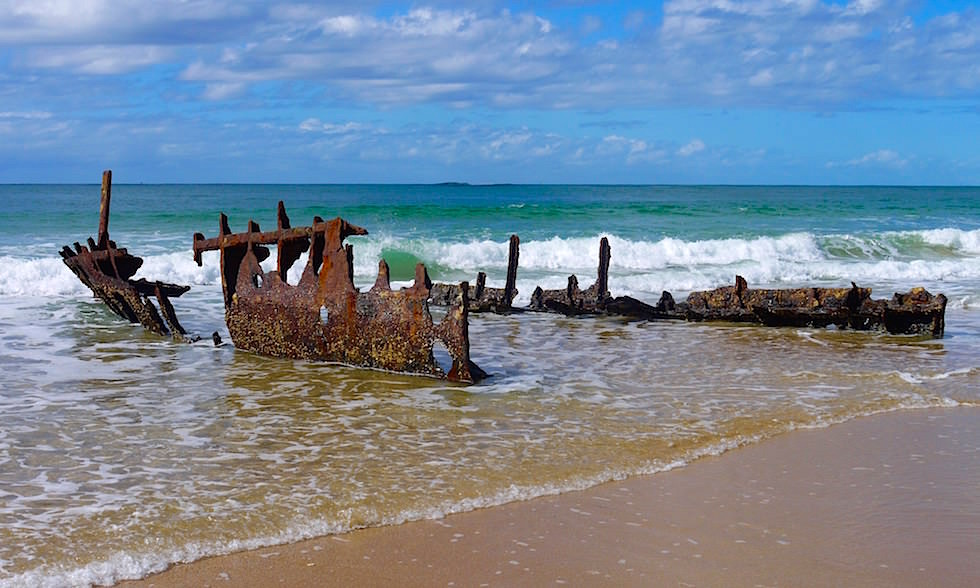 Wrack Dicky Beach Queensland Australien