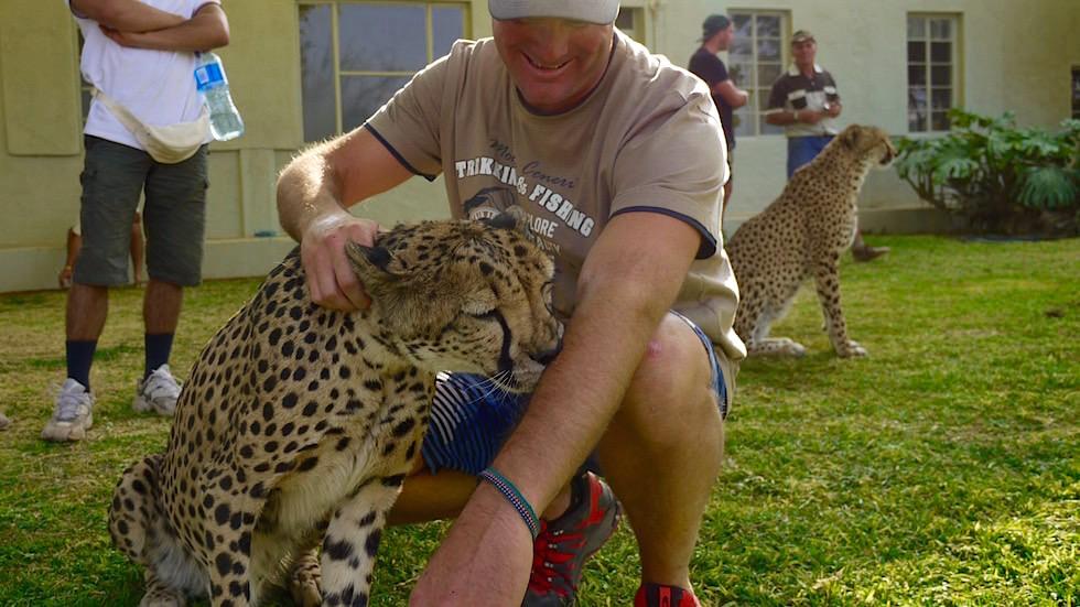 Otjitotongwe Cheetah Park - Kuscheln mit Geparden - Namibia Afrika