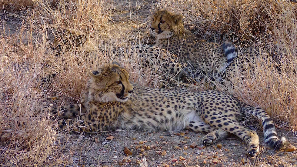 Außengehege Otjitotongwe Cheetah Park - Namibia Afrika