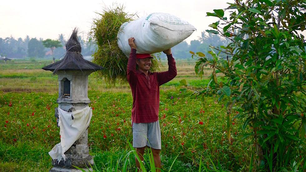 Bali Foto-Essay: Reisernte Reisfelder Schreine - Bali