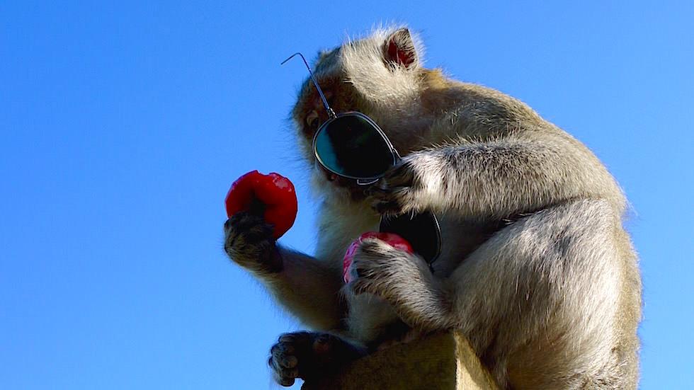Affen Deibstahl Früchte gegen Brille Uluwatu Tempel - Bali