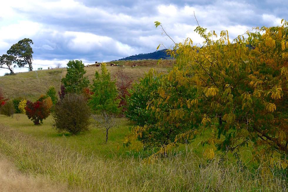 Im Süden Great Alpin Road Victoria