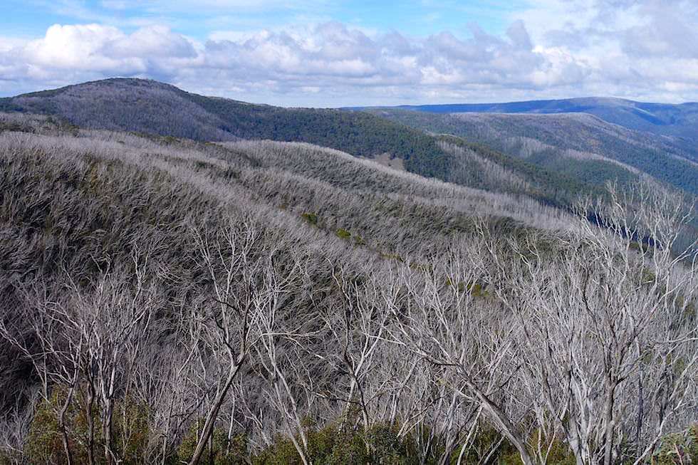 Mt Hotham - Great Alpin Road - Victoria