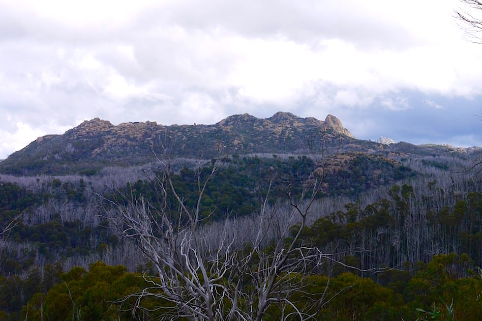 Blick auf The Horn im Mt Buffalo National Park an der Great Alpin Road - Victoria
