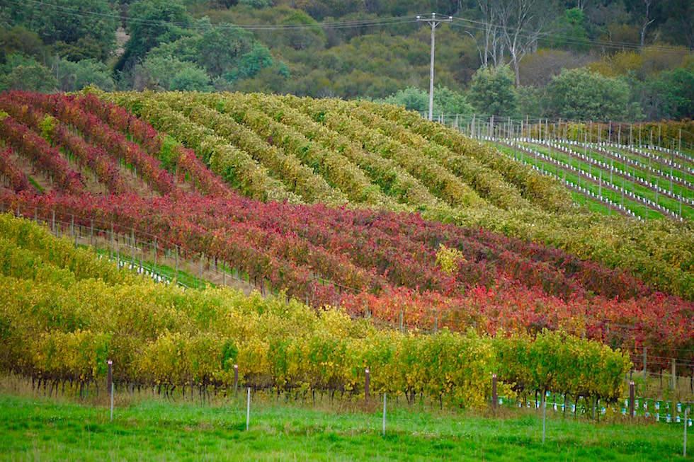 Weinanbau Gebiete bei Bright - Great Alpin Road - Victoria