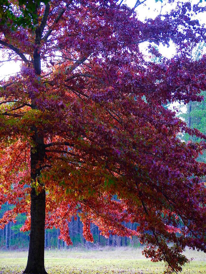 Bunte Laubbäume im Herbst - Bright - Victoria