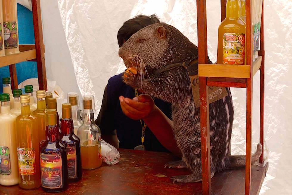 Auf dem Sonntagsmarkt in Huancayo - Peru