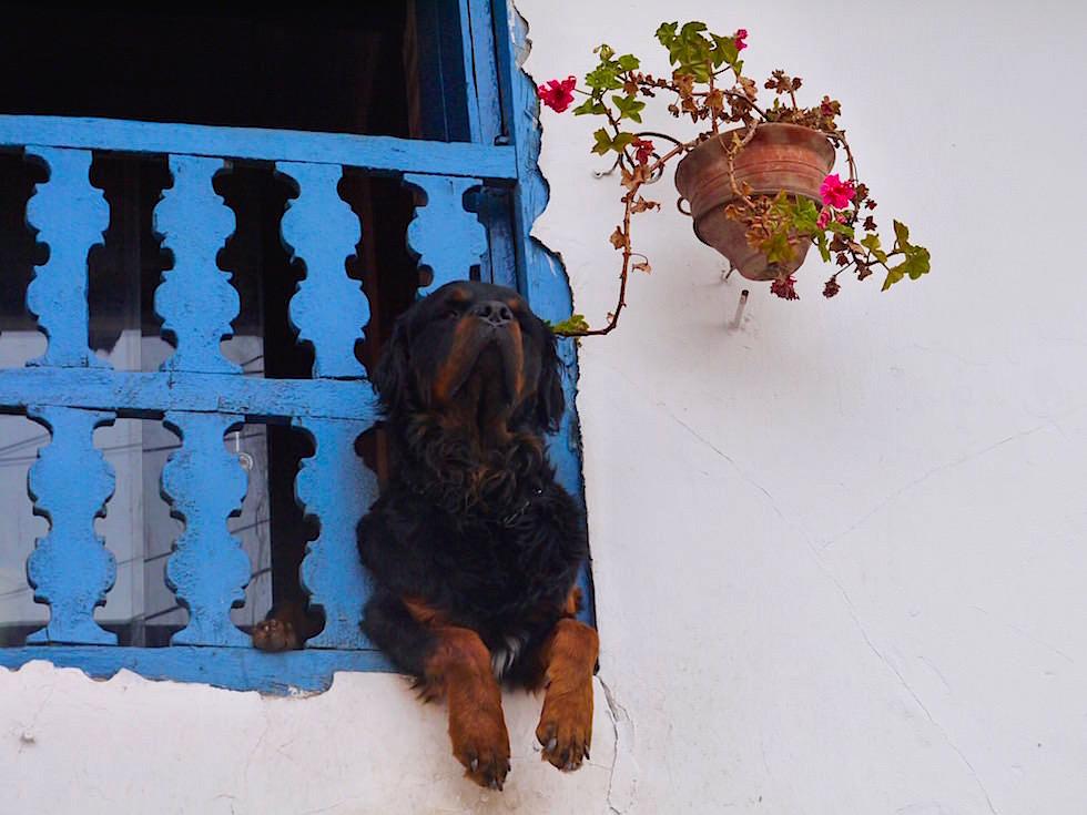 Hund am Balkon Barrio de San Blas - Cusco - Peru