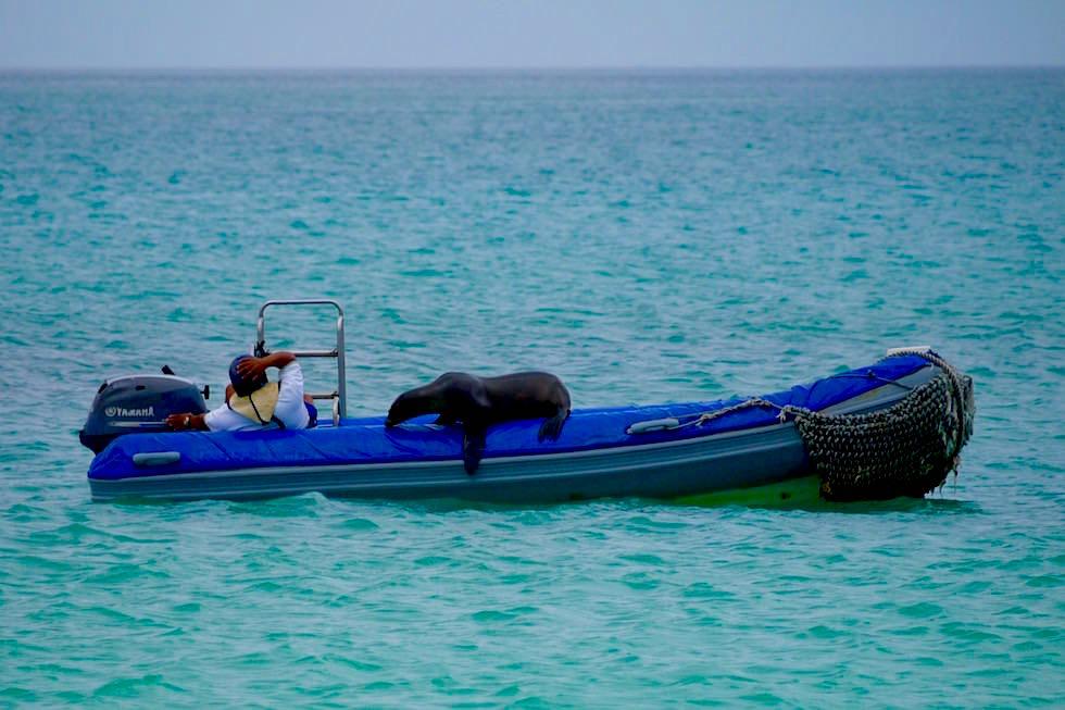 Seelöwe schläft auf dem Boot mit Bootsführer - Cerro Brujo bei San Cristobal - Galapagos