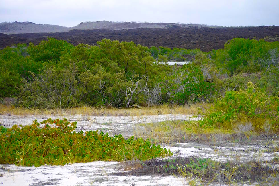 Landschaft Cerro Brujo - Galapagos San Cristobal