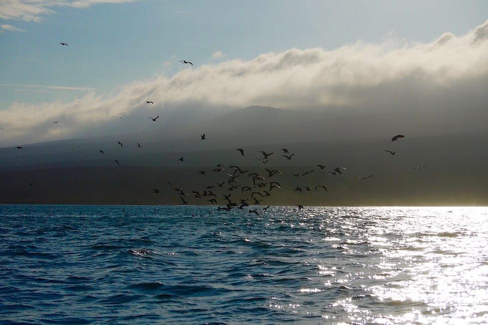 Küste San Cristobal im Dämmerlicht - Galapagos