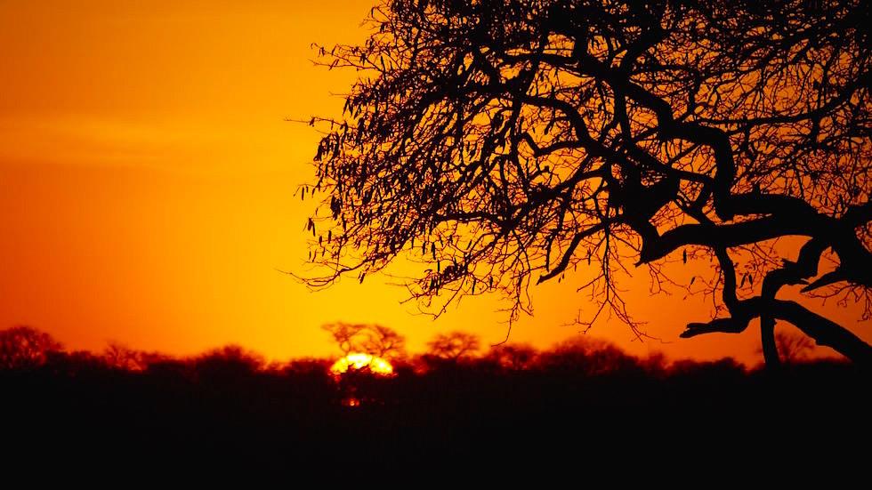 Sonnenaufgang - Serengeti National Park - Tanzania