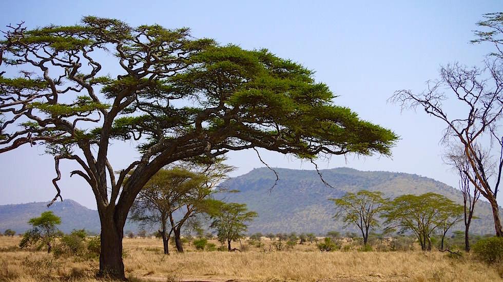Landschaft - Serengeti National Park - Tansania