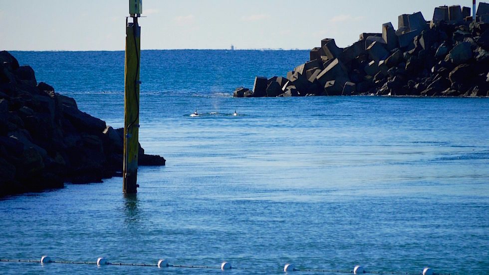 Tuncurry Rock Pool - Forster Tuncurry - Great Lakes New South Wales