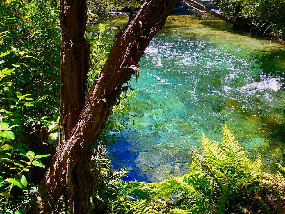 Te Waikoropupu Springs oder Pupu Springs - Spazierweg zu den Quellen - Golden Bay - Südinsel Neuseeland