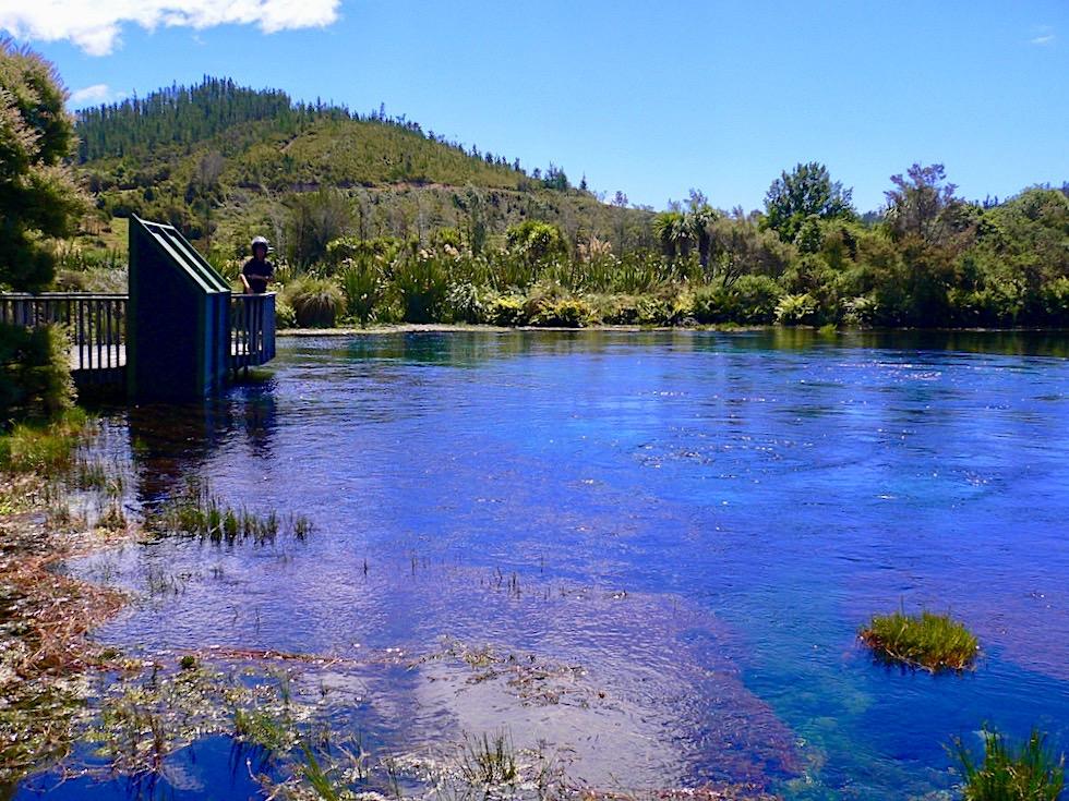 Te Waikoropupu Springs oder Pupu Springs - Ausblick auf die kristallklare Quelle - Südinsel Neuseeland