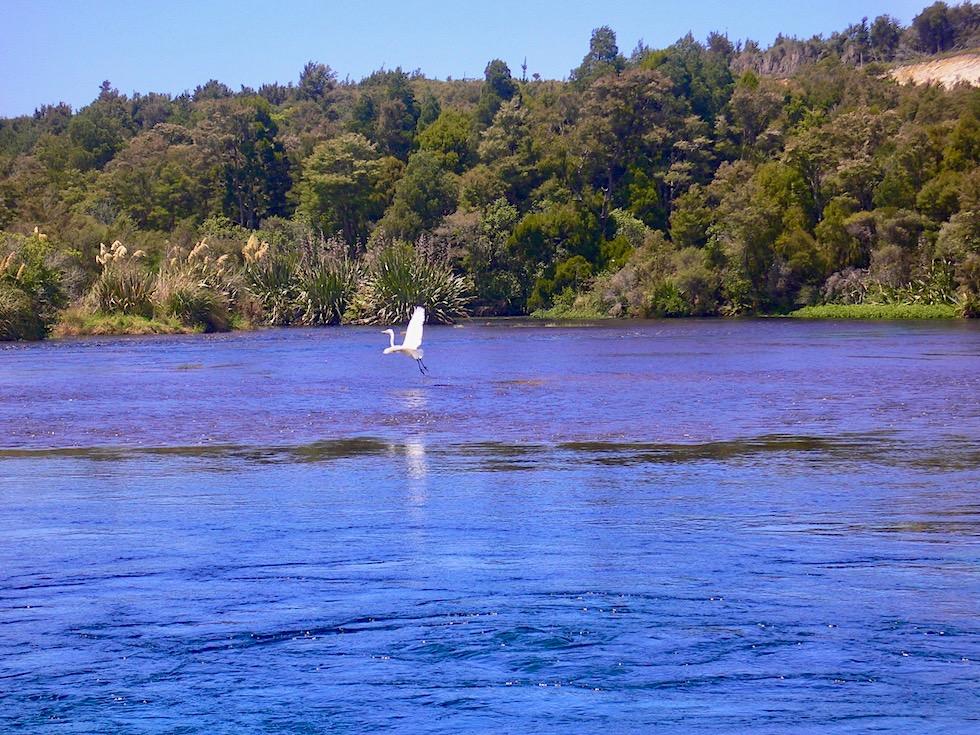 Te Waikoropupu Springs oder Pupu Springs - Maori Legende - Golden Bay - Südinsel Neuseeland