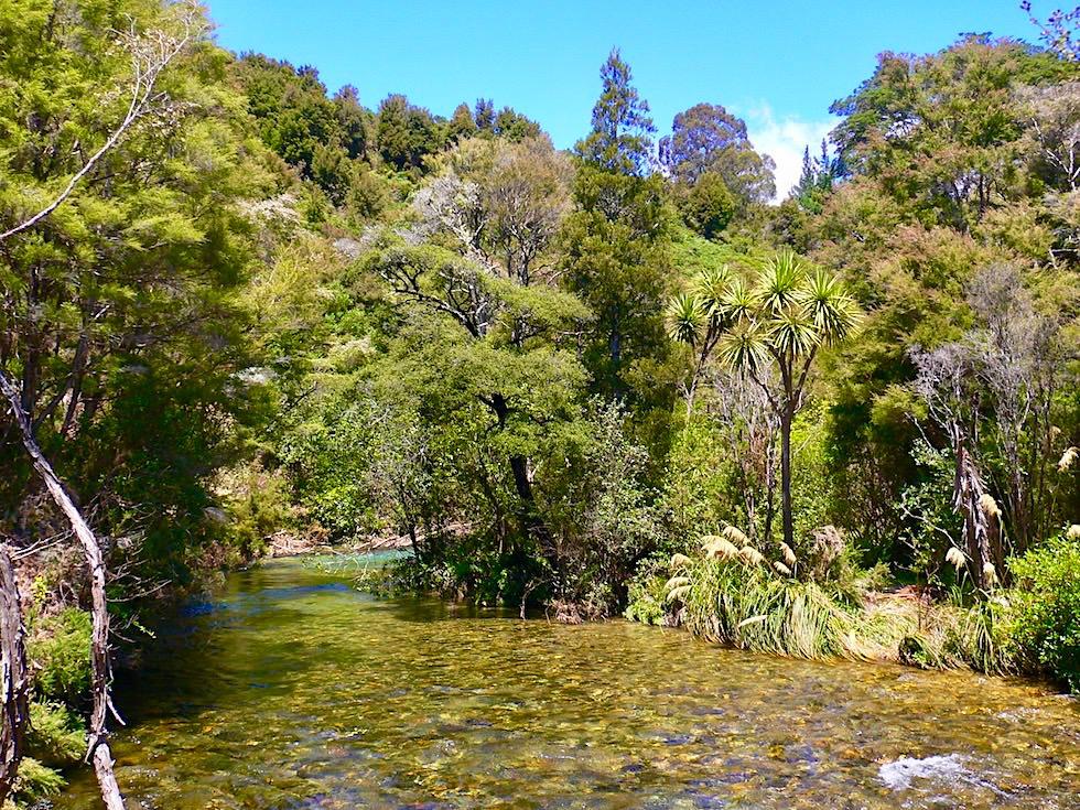 Pupu Springs - Zugang zu den Quellen führt entlang des Wasserlaufs - Golden Bay - Südinsel Neuseeland