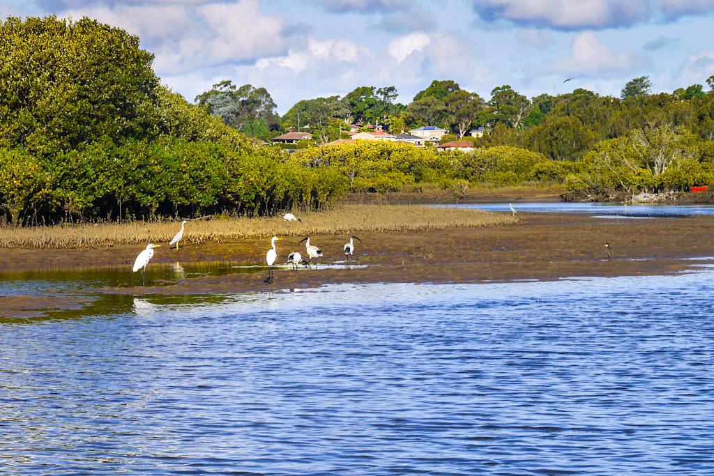 Minnamurra River - ein kleines Fisch- und Vogelparadies - Kiama Highlights - New South Wales