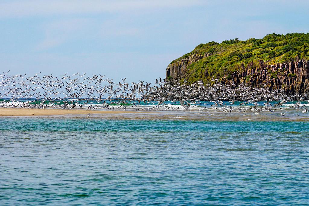Minnamurra Spit und Starck Island ist ein Fisch- und Vogelparadies - Umgebung von Kiama - New South Wales