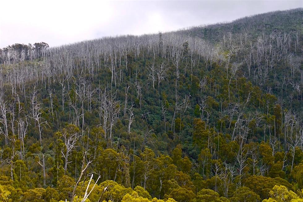 Blick in die Berge - Kosciuszko National Park - NSW