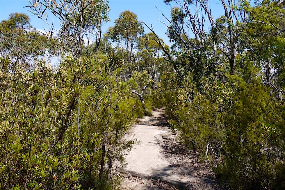Weg zum Pulpit Lookout - Blue Mountains - NSW