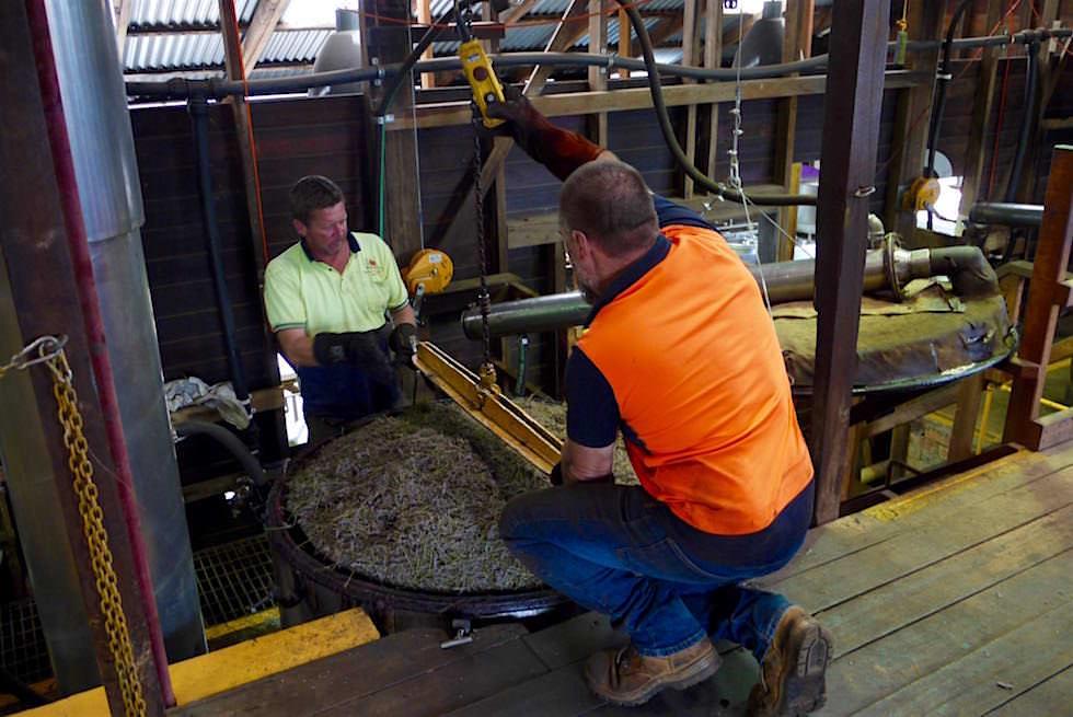 Lavendelöl Gewinnung - Bridestowe - Tasmania