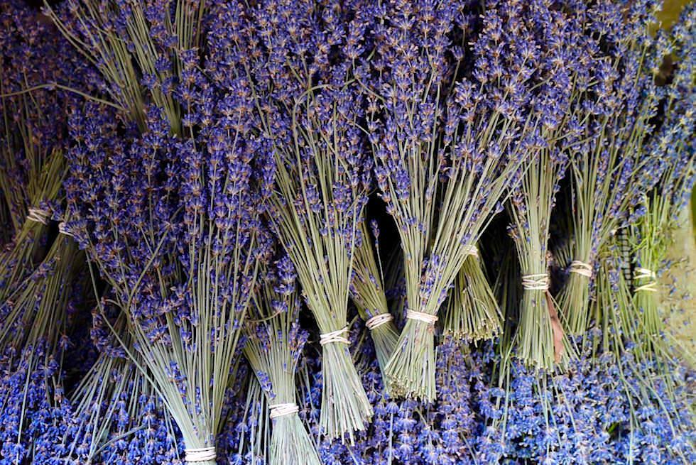 Lavendelbüschel - Bridestowe Lavender Farm - Tasmania