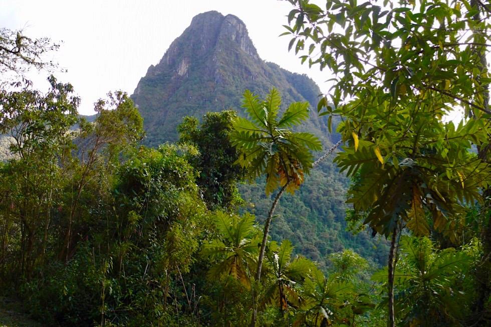 Valle del Cocora Wanderung - Ausblick auf Bergwelt - Salento - Kolumbien