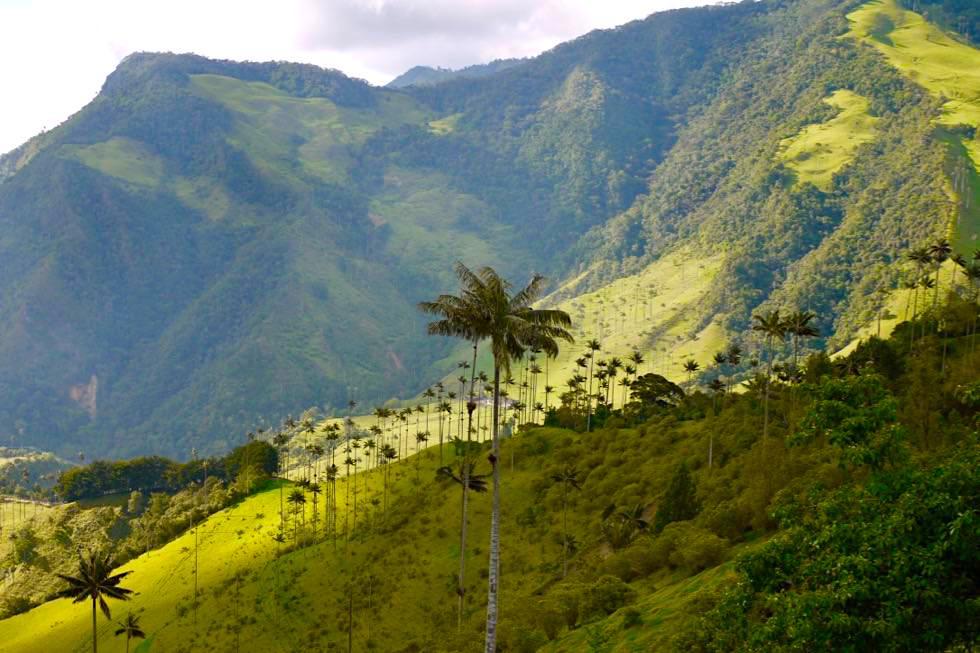 Valle del Cocora - Ausblick in die Berge & auf die Wachspalmen - Salento - Kolumbien