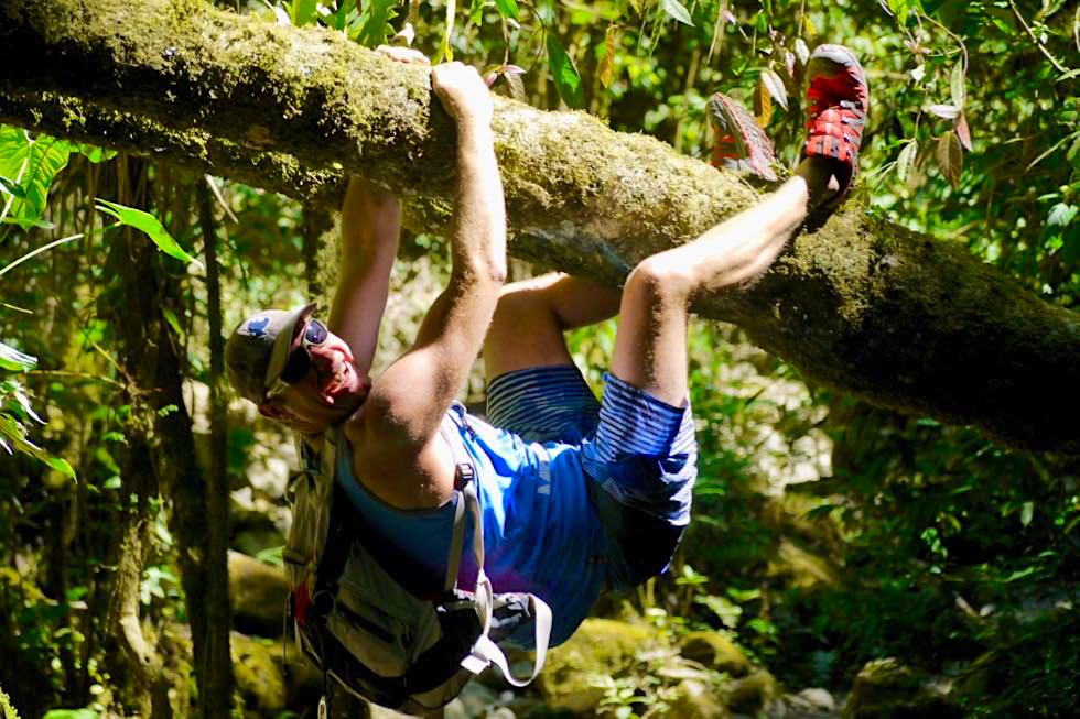 Faszinierende Valle del Cocora - Nebelwald & viel Abenteuer Spaß - Salento - Kolumbien