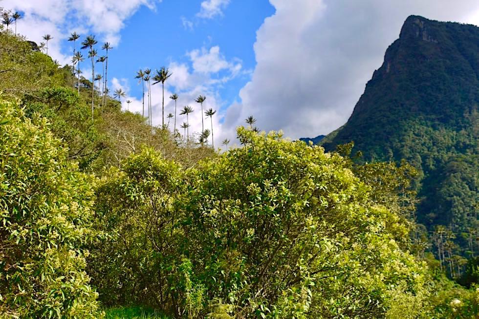 Valle del Cocora Wanderung - Ausblick Berge & Wachspalmen - Salento - Kolumbien