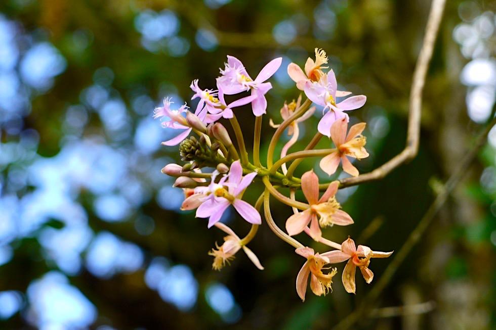 Valle del Cocora Wanderung - Blumen am Wegrand - Salento - Kolumbien