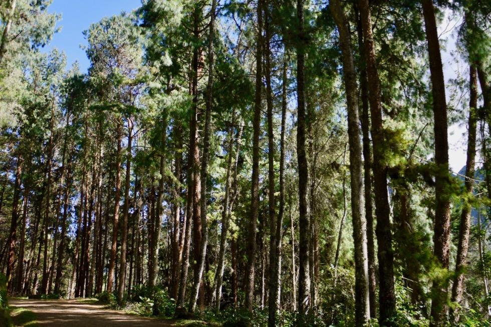 Valle del Cocora Wanderung - Waldweg - Salento - Kolumbien
