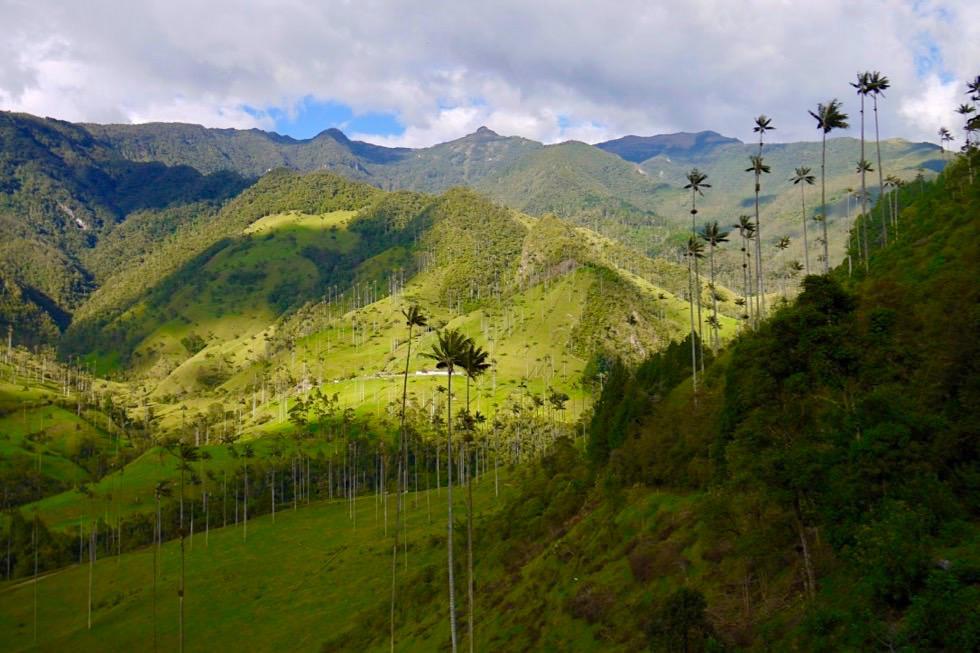 Außergewöhnlich schöne Valle del Cocora Wanderung - Salento - Kolumbien