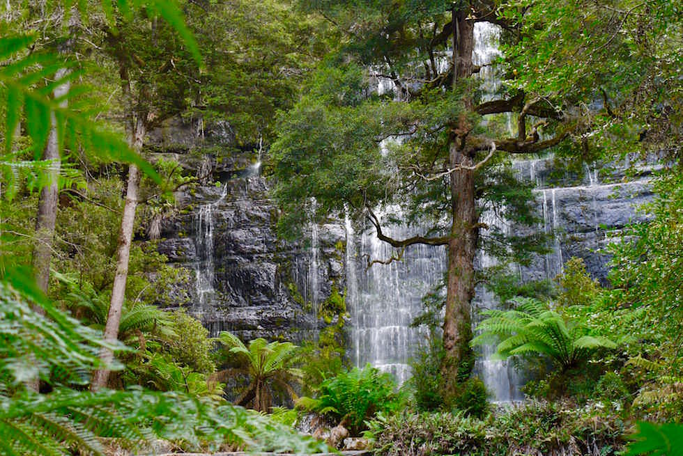 Blick auf Russell Falls halbe Höhe - Mt Field NP - Tasmania - Tasmanien