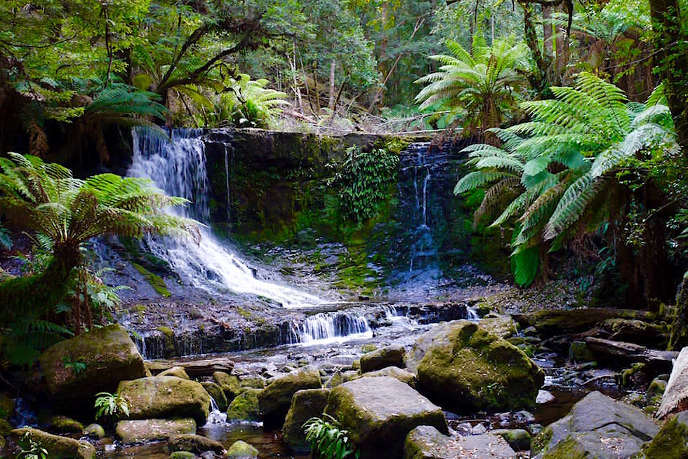 Blick auf Horseshoe Falls - Mt Field National Park - Tasmania - Tasmanien