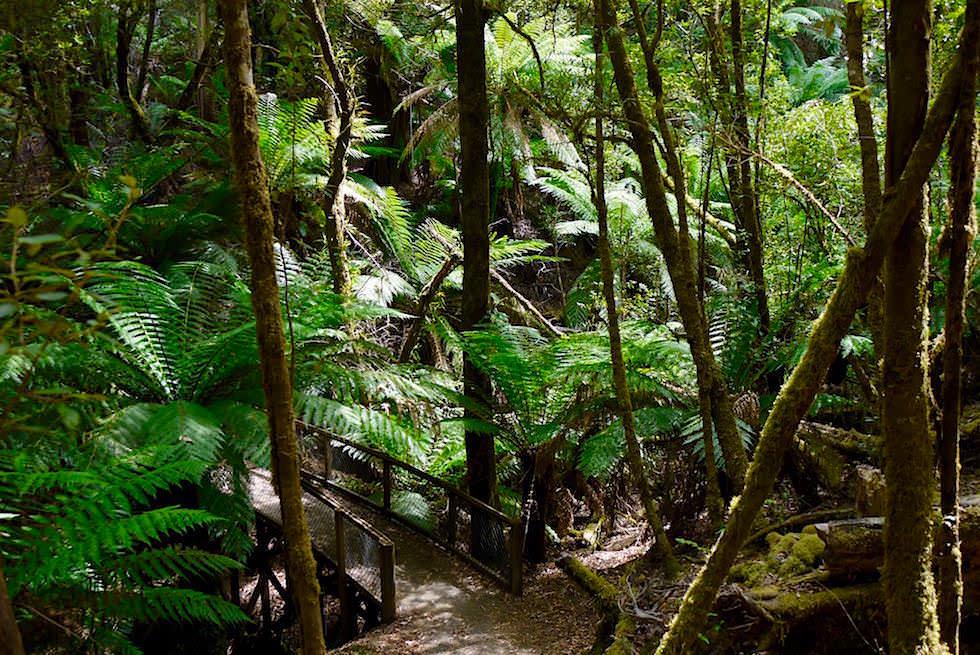 Russell Falls - Lady Barron Falls - Rundweg im Mt Field National Park - Tasmanien