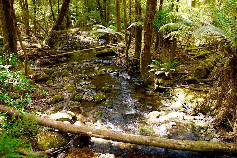 Bach bei Lady Barron Falls - Mt Field NP - Tasmanien