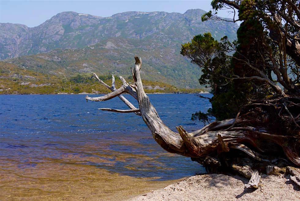 Dove Lake - Blick aufs gegenüberliegende Ufer - Tasmanien