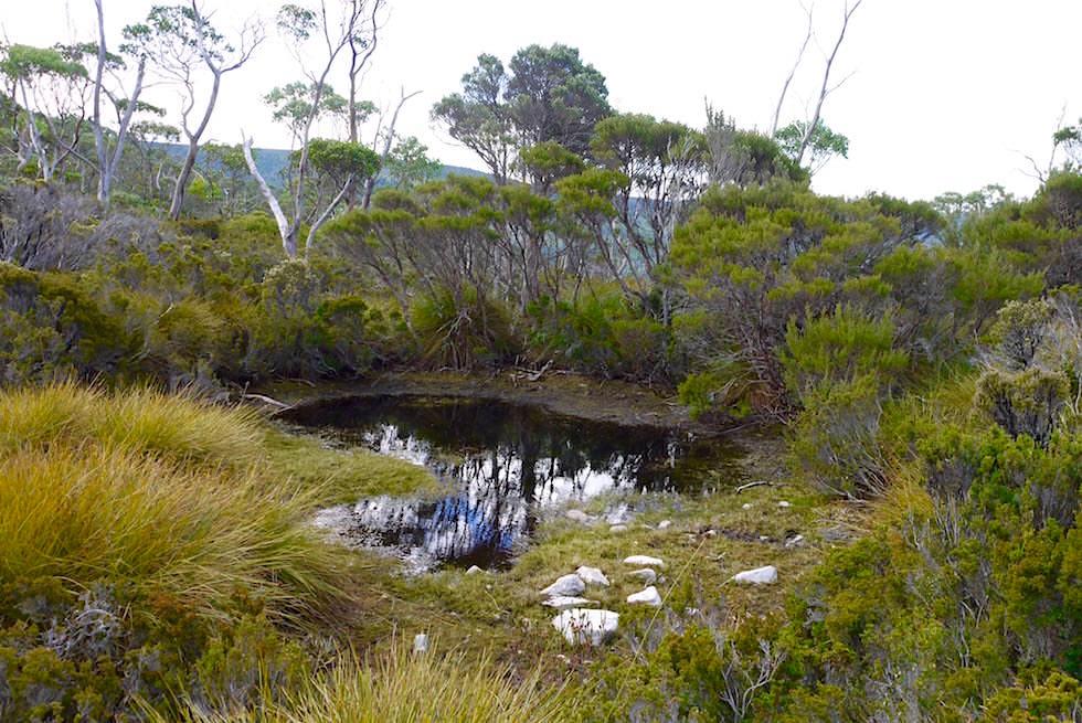 Pfützen & Landschaft - Cradle Mountain Wanderung - Tasmanien