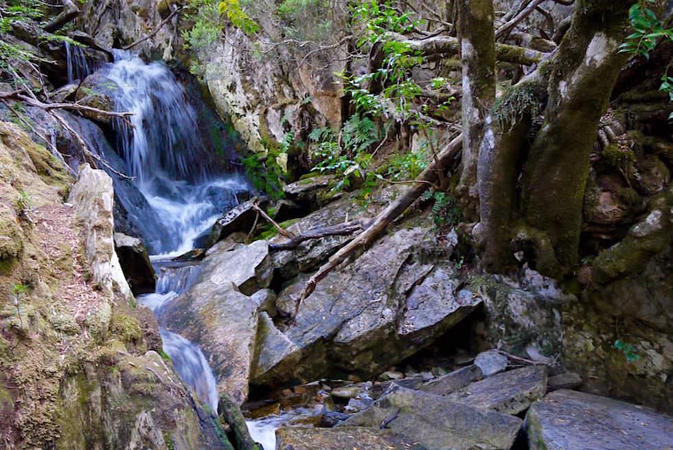 Crater Falls - Cradle Mountain Wanderung - Tasmanien