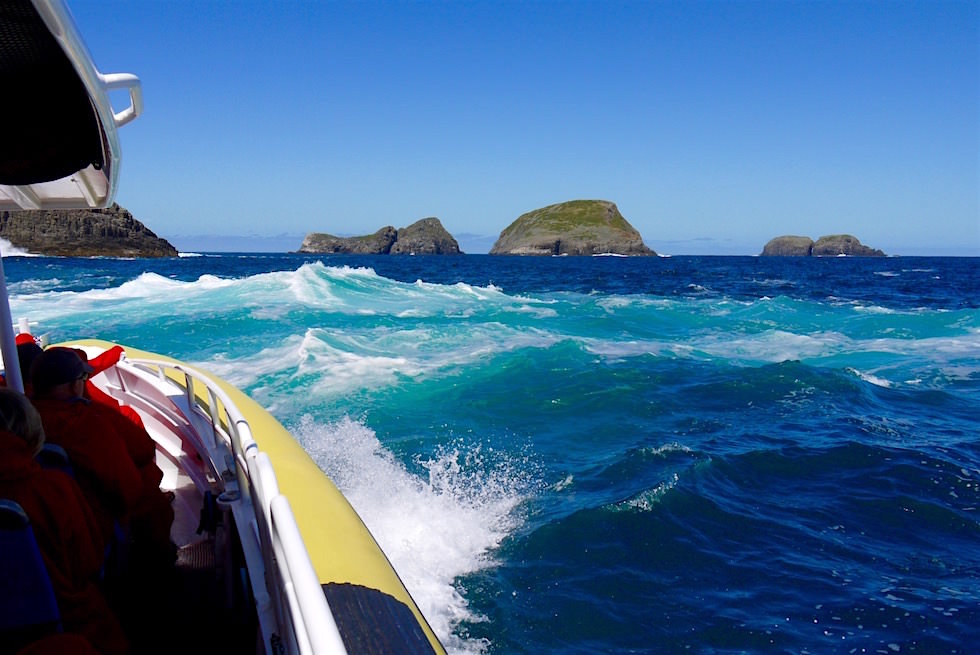 Wellen - Southern Ocean - Bruny Island Cruise - Tasmanien